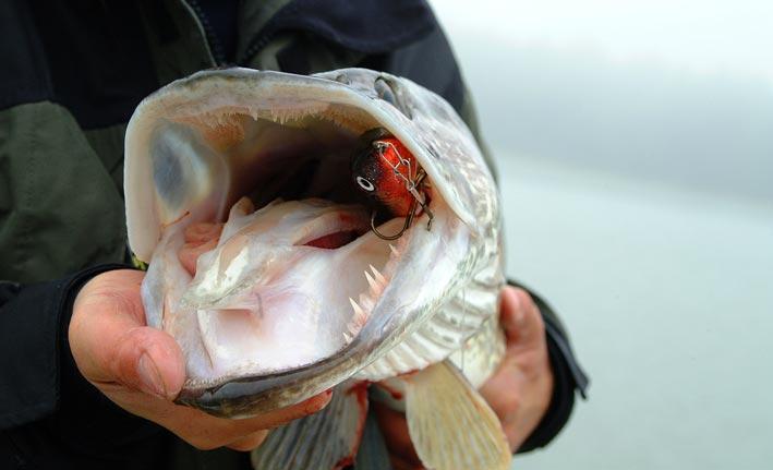 наживка на крючке рыбака сканворд